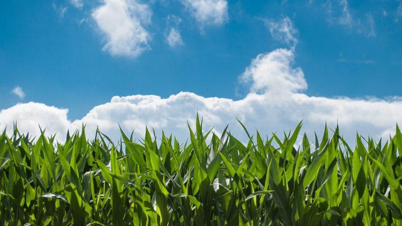 I prodotti dell'agricoltura nel Cilento