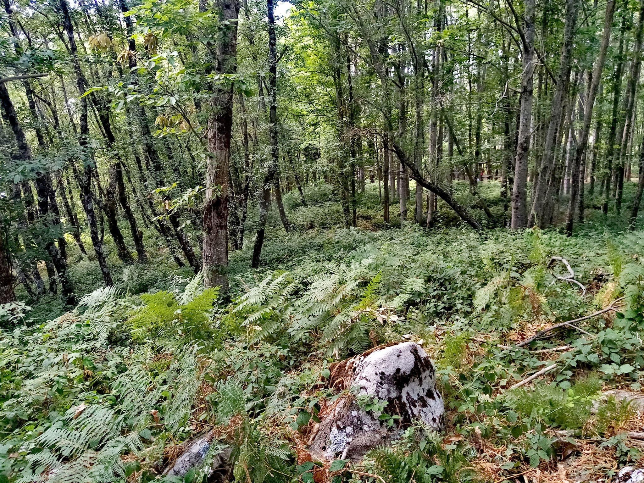 Macchia e arbusti